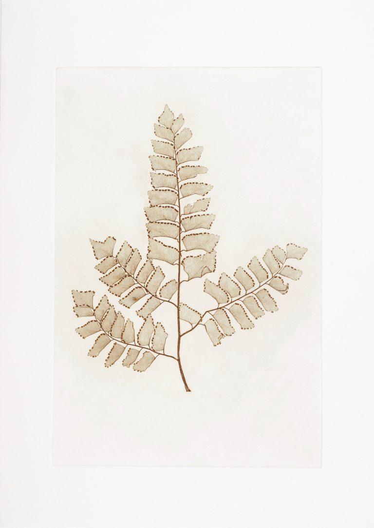 Aus der Serie THE PENCIL OF NATURE, Naturselbstdruck (Frauenfarn)